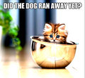 Did the dog ran away? - kittens fan art