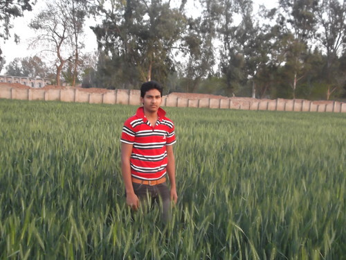 Beautiful Pictures wallpaper with a grainfield entitled Faheem