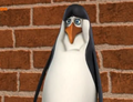 Kowalski - kowalski photo