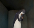 More Kowalski stuff (I have a lot of it.) - kowalski photo