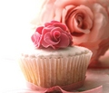 Pink Cupcake - colors photo