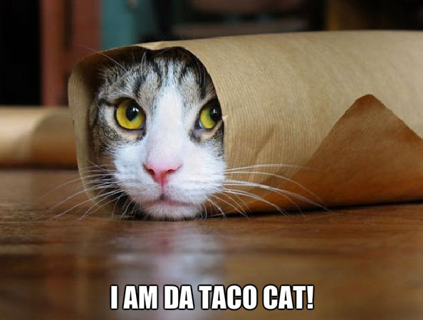 Animal Humor images Taco cat wallpaper and background photos