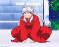 lost puppy - inuyasha fan art