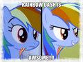 rainbow d