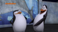 ... xD - penguins-of-madagascar photo