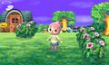 Animal Crossing  - animal-crossing photo