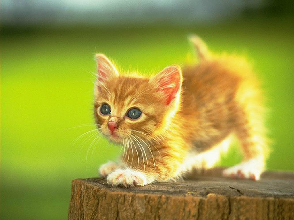Cute Kitten on a stump