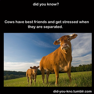 Did 你 Know?