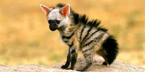 Hyena Дети