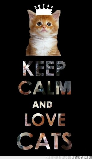 Keep Calm & amor gatos