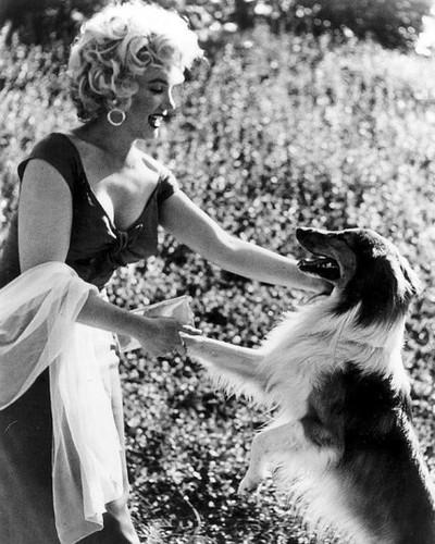Marilyn Monroe karatasi la kupamba ukuta titled Marilyn loved wanyama
