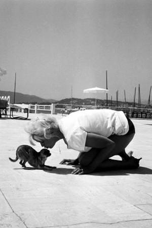 Marilyn loved animals