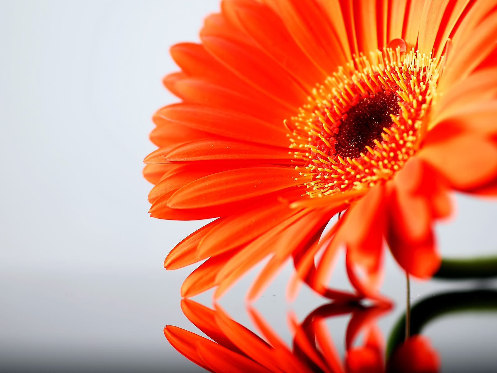Color images Orange Flowers HD wallpaper and background photos ...