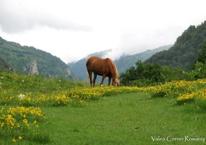 Romania scenery Carpathian mountains eastern Eropah
