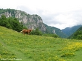 Romania beautiful scenery Carpathian mountains - romania wallpaper