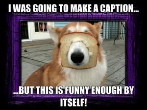 Toasty dog