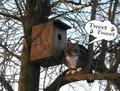 Tweet , Tweet - animal-humor photo