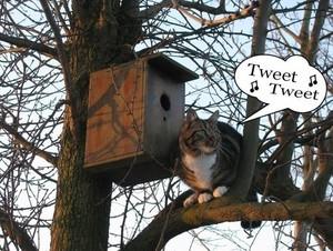 Tweet , Tweet
