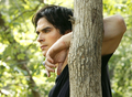 damon in a tree - ian-somerhalder photo
