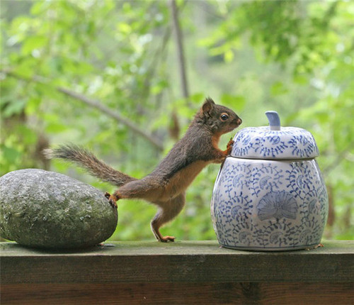 Domestic 動物 壁紙 possibly with a 木, ツリー squirrel, a squirrel, and an eastern grey リス entitled 画像