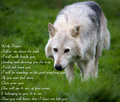 wolf prayer - wolves photo