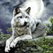 ★ Otkon enà héi Okwaho ☆  - wolves icon