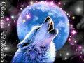 wolves - ★ Otkon enà héi Okwaho ☆  wallpaper
