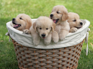Adorable cachorritos