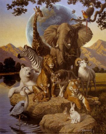 world wildlife fund images animals wallpaper and background photos