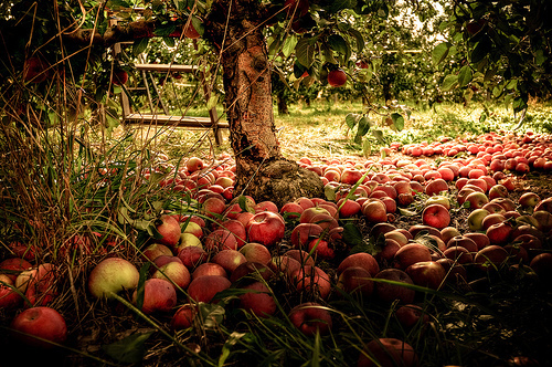 Autumn images Autumn Apple Orchard wallpaper and