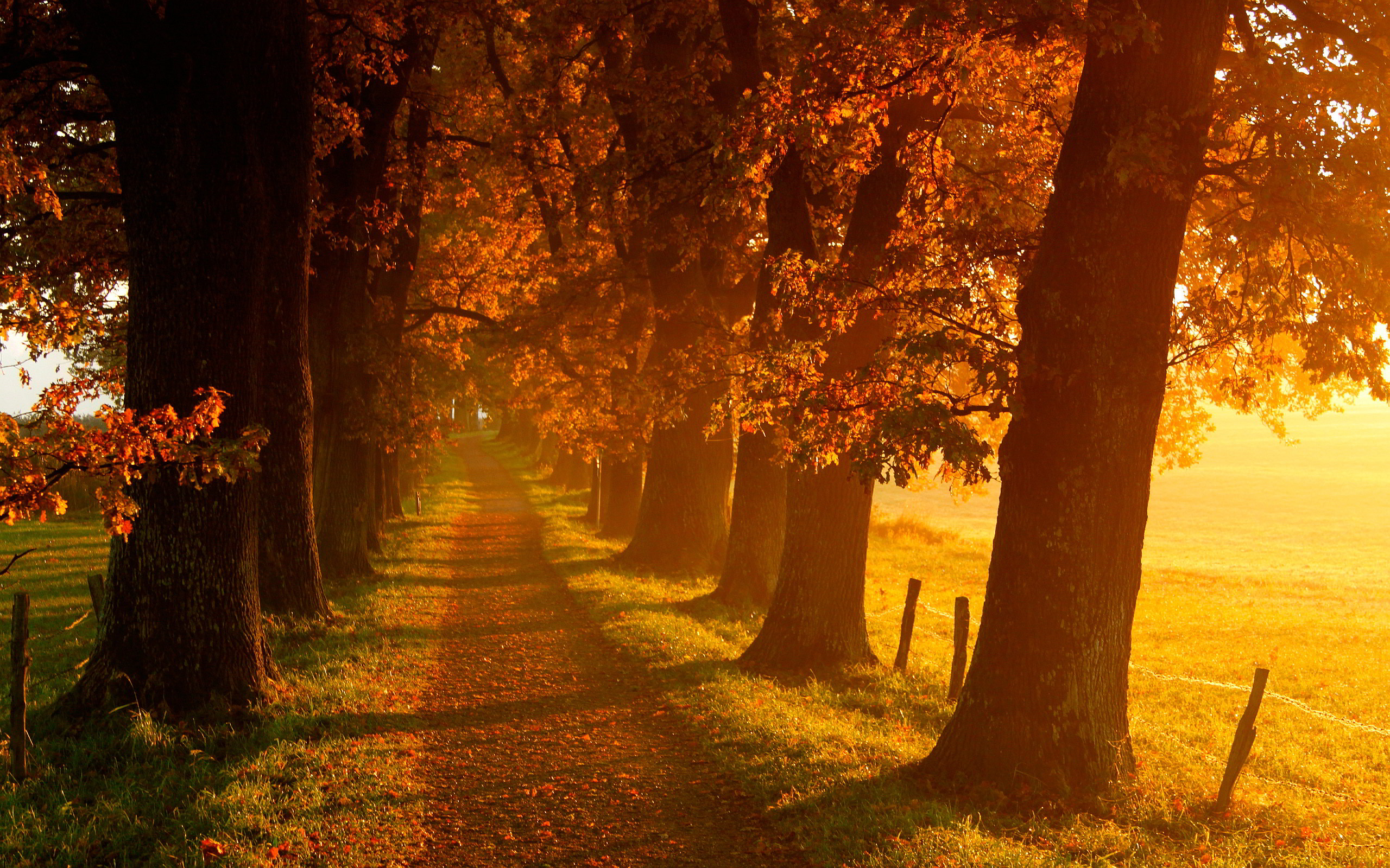 Autumn Images Scenery HD Wallpaper And Background Photos