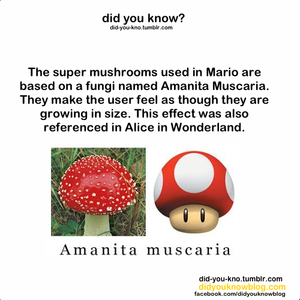 Did te Know?