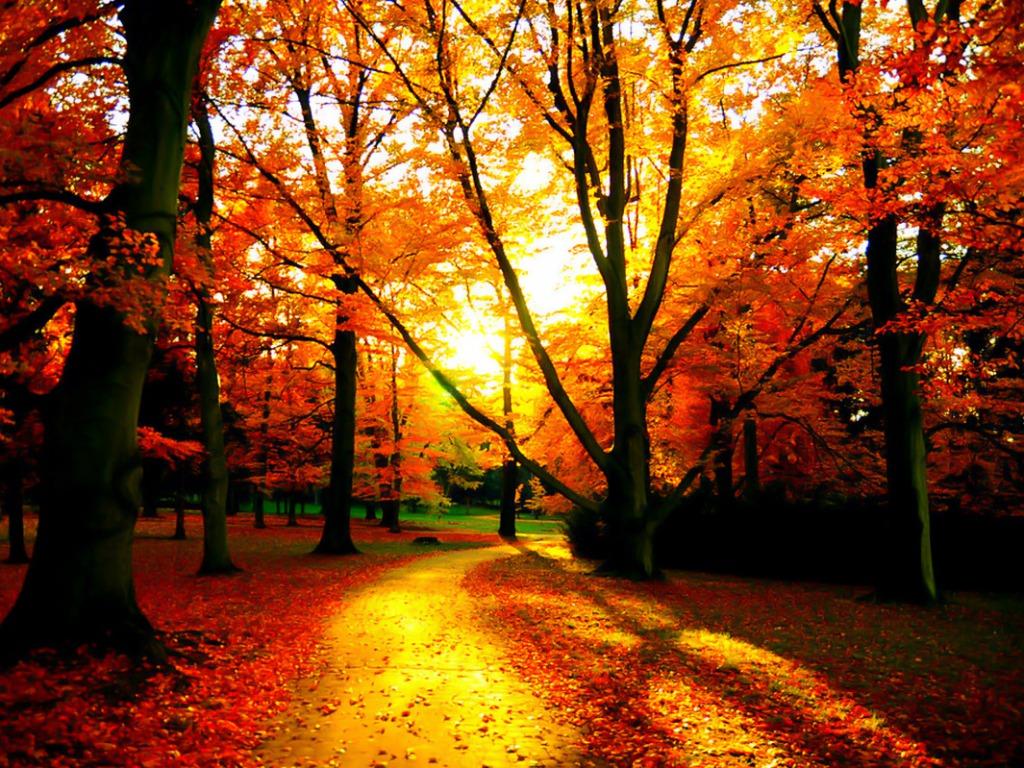 Fall Обои