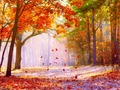 Fall Wallpaper - cynthia-selahblue-cynti19 wallpaper