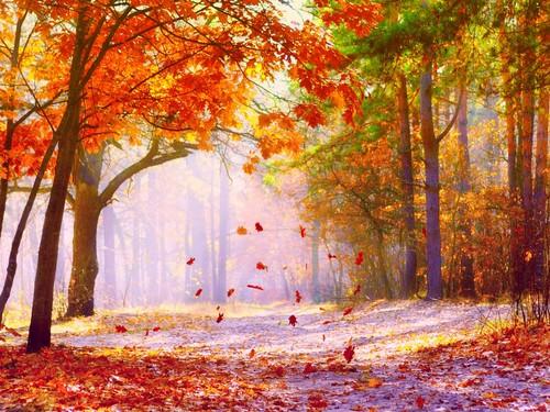 cynthia-selahblue (cynti19) Hintergrund with a beech, a live oak, and a baum titled Fall Hintergrund