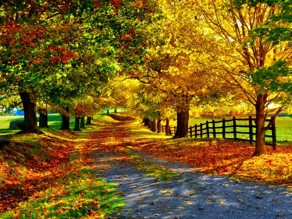 fall wallpaper cynthia selahblue cynti19 wallpaper
