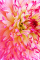 Flower - flowers photo