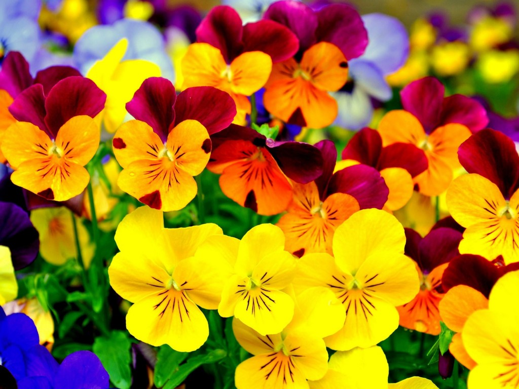 Flowers Flowers Wallpaper Fanpop