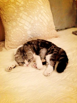 Her cat- Meredith