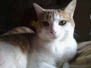 My cat Sugar ভালুক