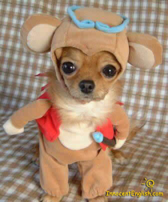 omg puppies fanpop puppy adorable