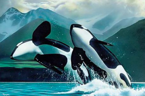 Orca the killer whale images orcas wallpaper and background photos orca the killer whale wallpaper probably with a killer whale called orcas altavistaventures Images