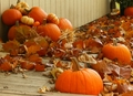 Pumpkins - autumn photo