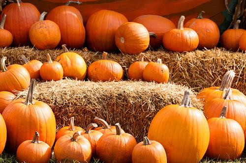Pumpkins autumn photo 35540965 fanpop - Fall wallpaper pumpkins ...