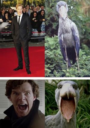 Sherlock mga hayop