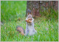 Squirrel - squirrels photo