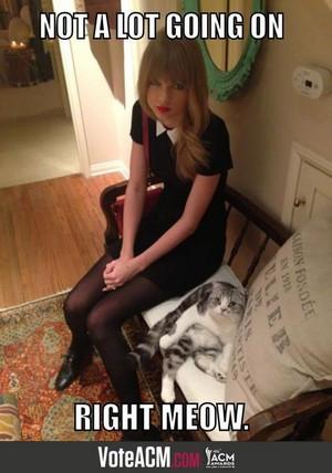 Taylor तत्पर, तेज, स्विफ्ट and her cat Meredith