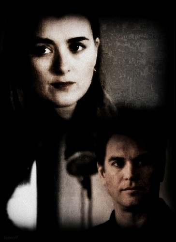 Tiva fondo de pantalla entitled Tony and Ziva