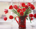 Tulips  - flowers photo