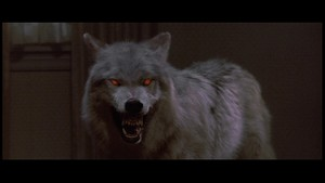 Wolf - Fright Night